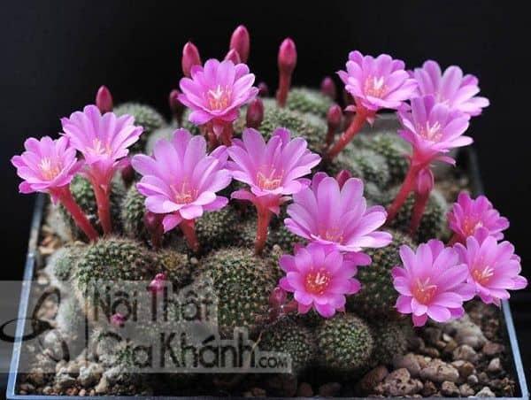 10 mẫu hoa để bàn phòng khách là Hot trend 2019 - 10 mau hoa de ban phong khach la hot trend 2019 3