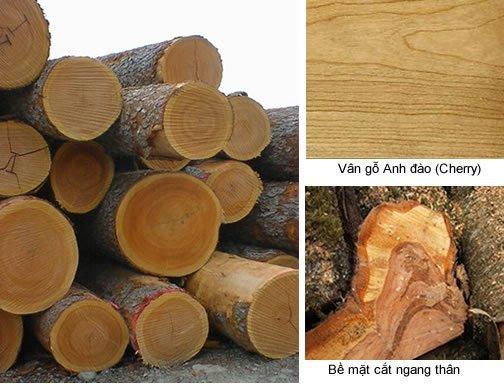 Những ứng dụng của gỗ anh đào - nhung ung0dung cua go anh dao cherry 1